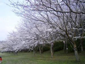 20062_210