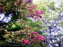 Morioka_028