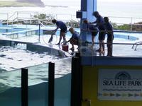 sealifepark-p