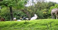 zoo-toritoshika